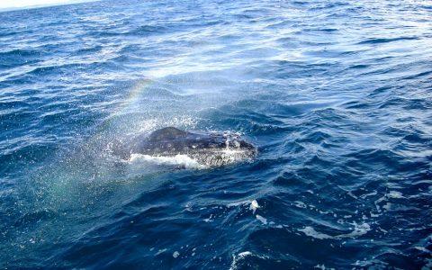 Wale beobachten Hervey Bay