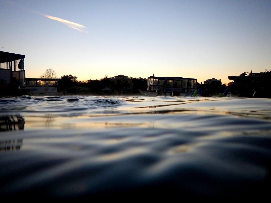 Florida Highlight Schwimmen mit Manatees