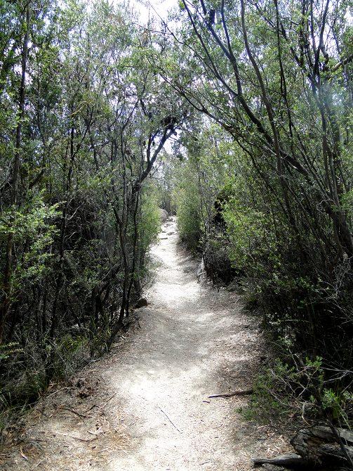 Bushwalking zum Traumstrand