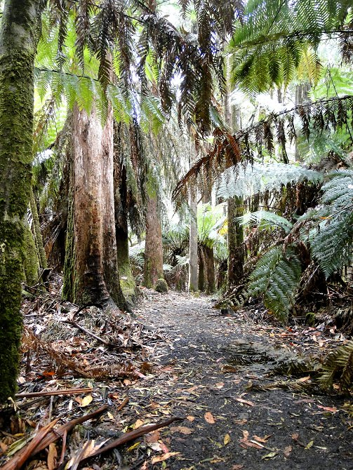 Regenwald Bushwalking